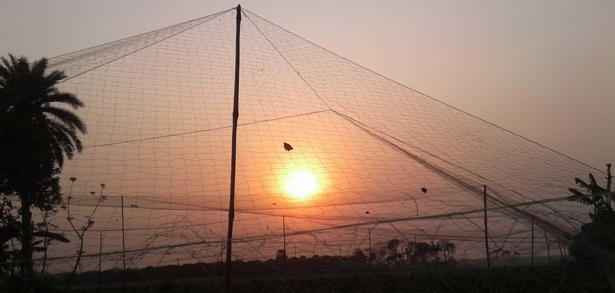 শার্শায় কারেন্ট জালে নির্বিচারে চলছে পাখি শিকার