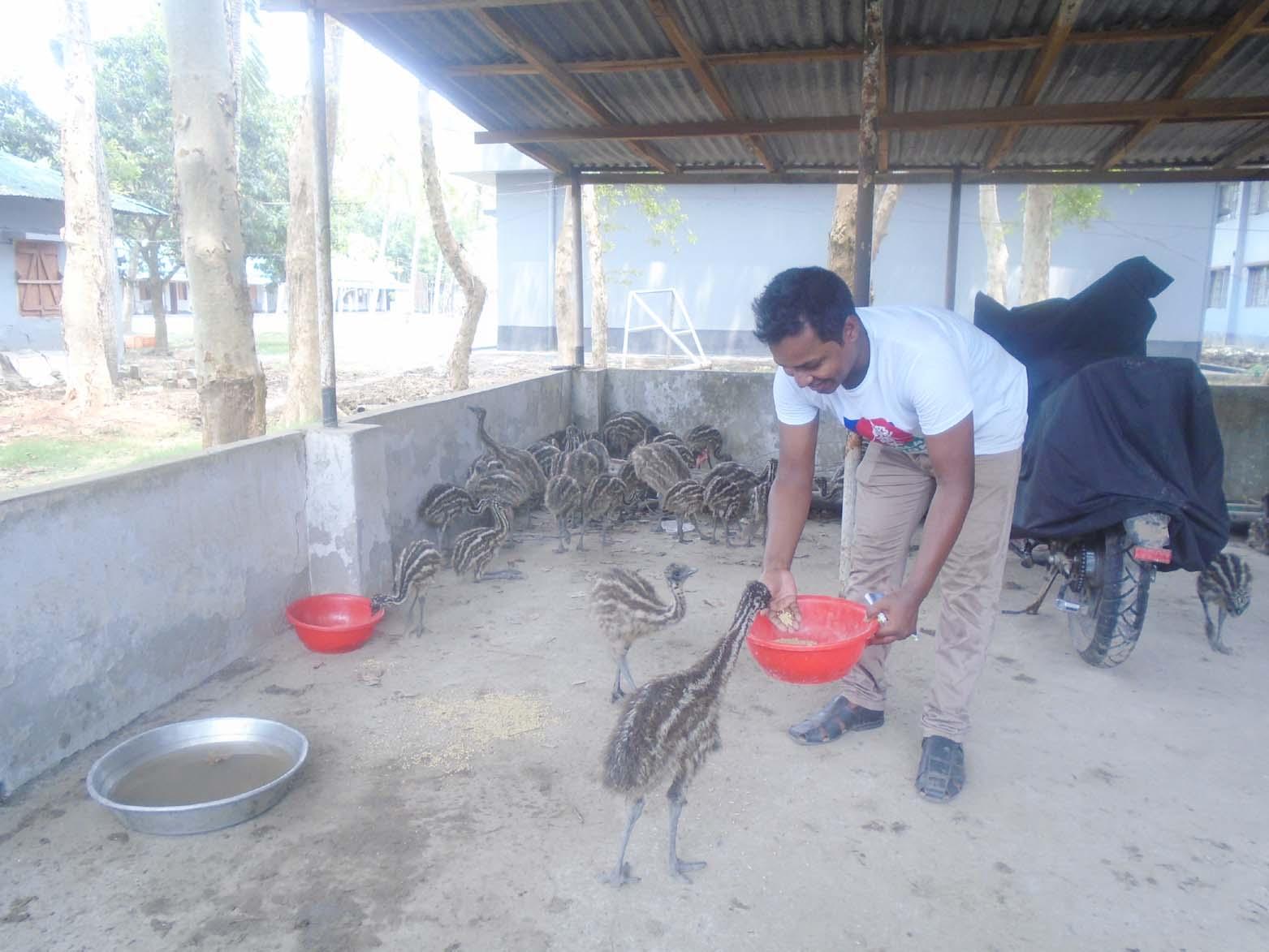 বিজিবি'র হাতে জব্দ বাচ্চাগুলো ইমু পাখির