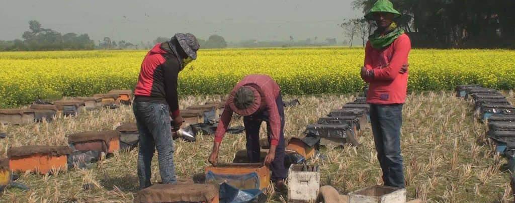 জেলায় মধু আহরণের লক্ষ্যমাত্রা ছাড়িয়ে উৎপাদিত মধু বিদেশে রপ্তানির সম্ভাবনা
