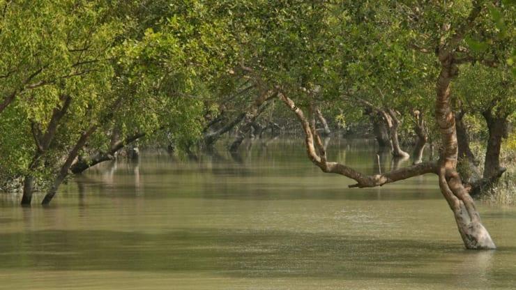 সুন্দরবনে বাটুলিয়া নদীতে নিষিদ্ধ জাল আটক