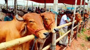 বেনাপোল সীমান্তের কুরবানীর পশুর হাট জমজমাট হলেও দাম কম: লোকসানের মুখে খামারী ও ব্যবসায়িরা