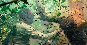 সুন্দরবনে মৌমাছির কামড়ে জেলের মৃত্যু