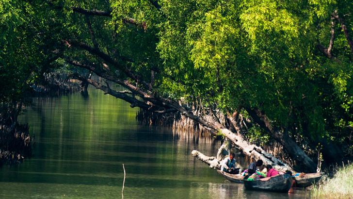 সুন্দরবনে বন বিভাগের অভিযানে মালামাল ফেলে পালিয়েছে ৪ জেলে: মামলা